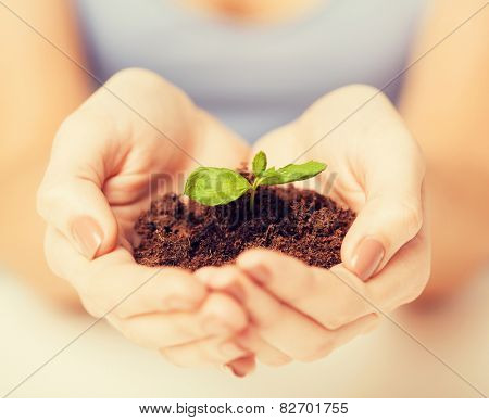 picture of woman hands with green sprout and ground