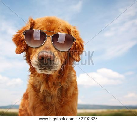 a cute golden retriever by a river or lake with sunglasses on