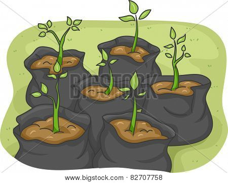 Illustration of Saplings in Black Garbage Bags at Different Stages of Growth