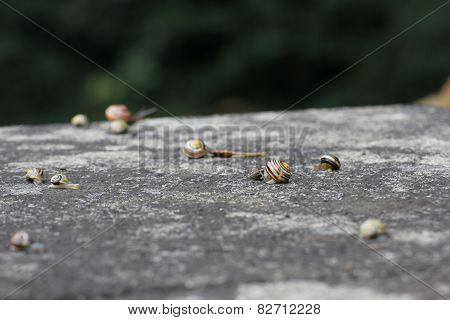 Slugs On Stone