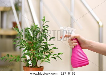 Male hand spraying flowers on light blurred background