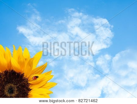Sunflower With Ladybird