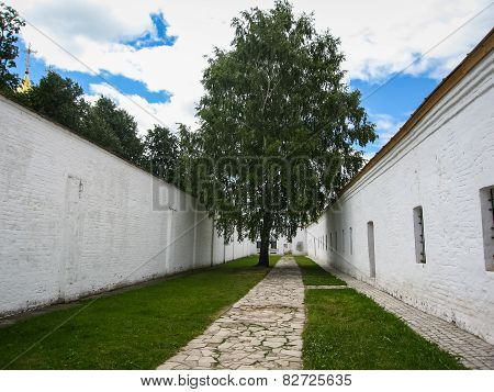 White Walls And Green Tree In Suzdal, Vladimir Region, Russia