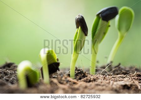 Root Seed On Soil in morning Begining Concept