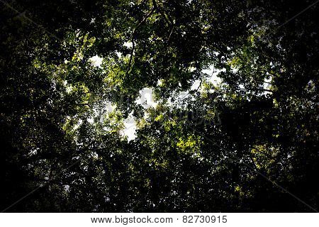 Dark Leaf Canopy