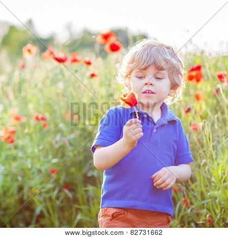 Cute Kid Boy With Poppy Flower On Poppy Field On Warm Summer Day