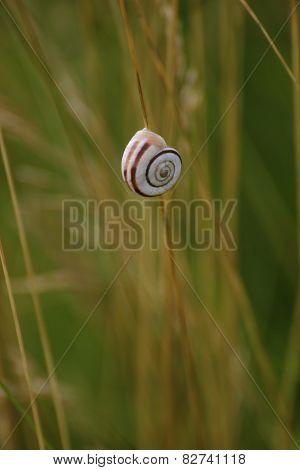 Snail On Straw