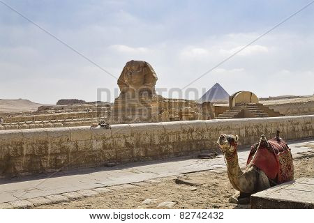 camel and Sphinx