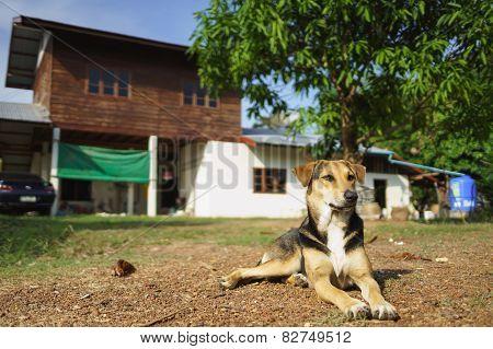House Protecting Dog