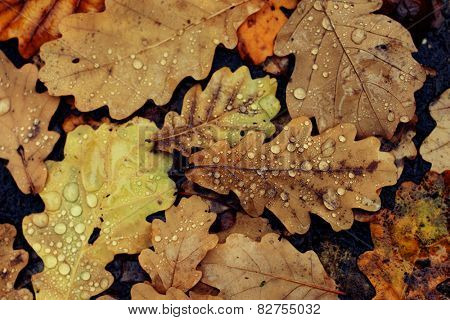 Fallen oak leaves on a dirt