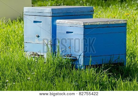 Two Bee Hive