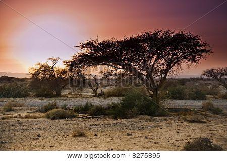 Sunset Arava