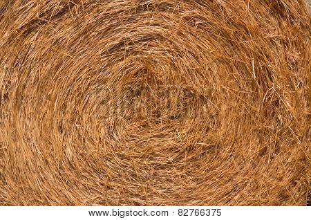 Swirl of Hay