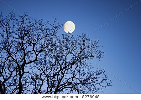 Moon through winter branches