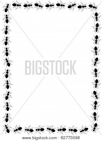 Ants Line / Frame