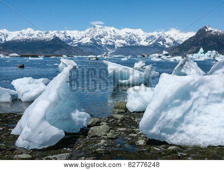 Icebergs at Columbia Glacier