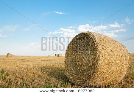 Bales On The Field