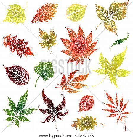Set 2 of autumn grunge leaves, Thanksgiving