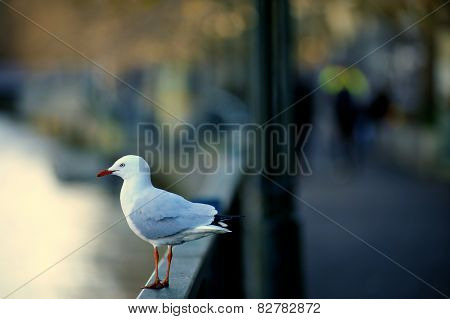 A sea gull sitting the edge of bridge