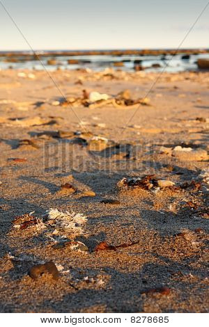 Sandy Coastline With Weed And Coral