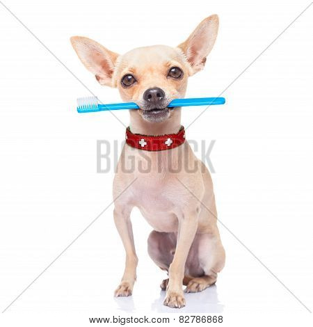 Toothbrush Dog