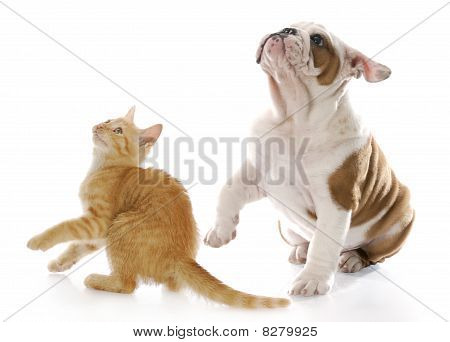 Scared Dog And Cat