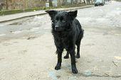 image of mongrel dog  - Mongrel dog outdoors - JPG