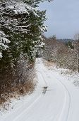 picture of bohemia  - snowy forest road South Bohemia Czech Republic - JPG