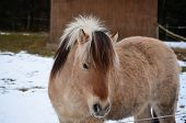 pic of bohemia  - brown horse on winter pasture - JPG