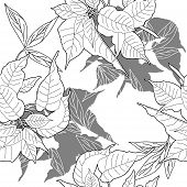 picture of poinsettia  - Seamless pattern with black and white poinsettia - JPG