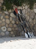 pic of watersports  - Row of kayak and paddleboard paddles waiting for resort guests to do watersports - JPG