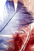 stock photo of unnatural  - The blue and the red feather background - JPG