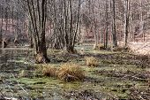 stock photo of swamps  - Floodplains  - JPG
