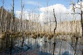 picture of swamps  - Floodplains  - JPG