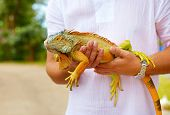 pic of pro-life  - young man herpetologist holding colorful iguana reptile - JPG