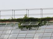 stock photo of bannister  - Plants growing through the roof of a greenhouse - JPG