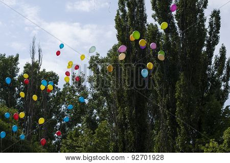 Balloons In The Sky Against Trees And The Sky, The Last Call School
