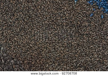 Ripe Sunflower Seed As Background