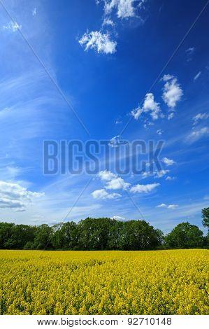 Beautiful Polish Landscape