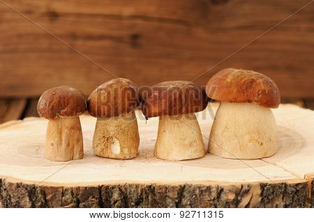 Four Wild Porcini Mushrooms Standing In A Row On Wooden Board With Growth Rings