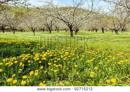 Lush Meadow With Flowers And Trees