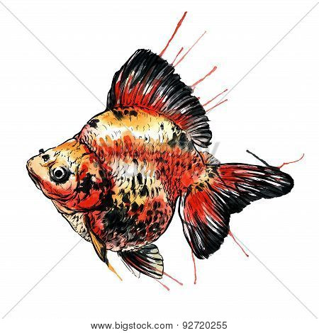 Gold fish vector watercolor illustration. Isolated on white