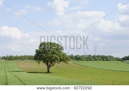The tree on the field