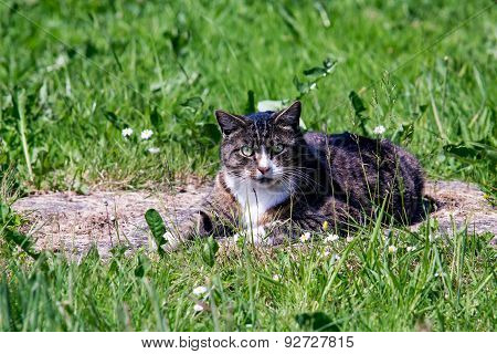Disturbed Cat While Relaxing In The Sunshine