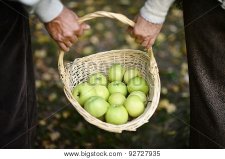 Hands holding basket with apples