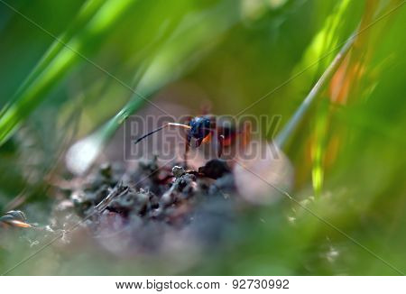 Ant In Grass