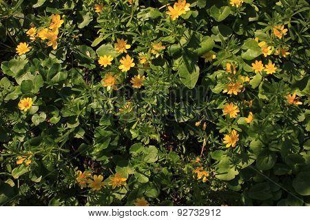 spring yellow wild flowers