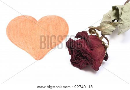 Heart Shape And Dried Red Rose On White Background