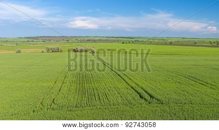 Expanse of Ukrainian agricultural fields
