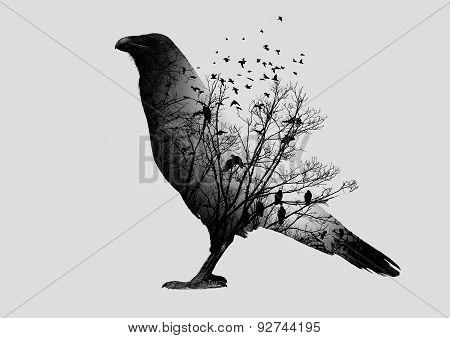 Double exposure of raven and trees